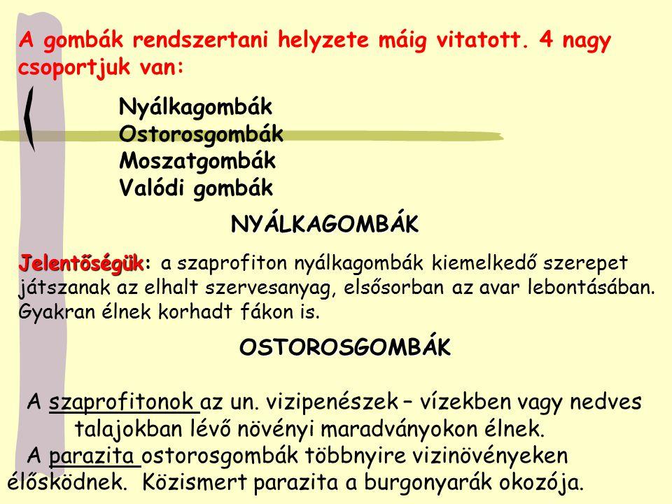NYÁLKAGOMBÁK OSTOROSGOMBÁK