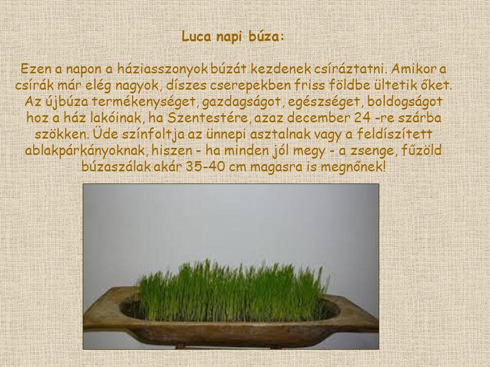 Luca napi búza: