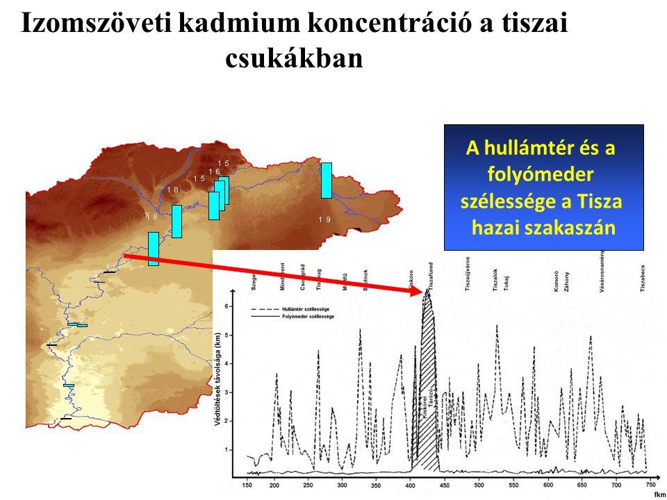Izomszöveti kadmium koncentráció a tiszai csukákban
