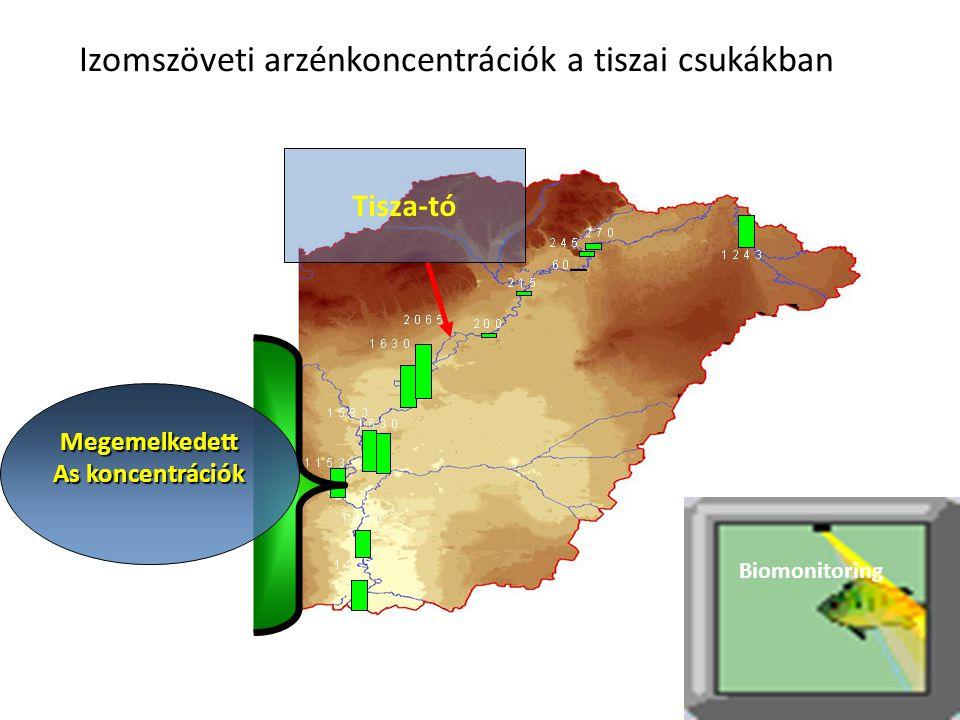 Izomszöveti arzénkoncentrációk a tiszai csukákban