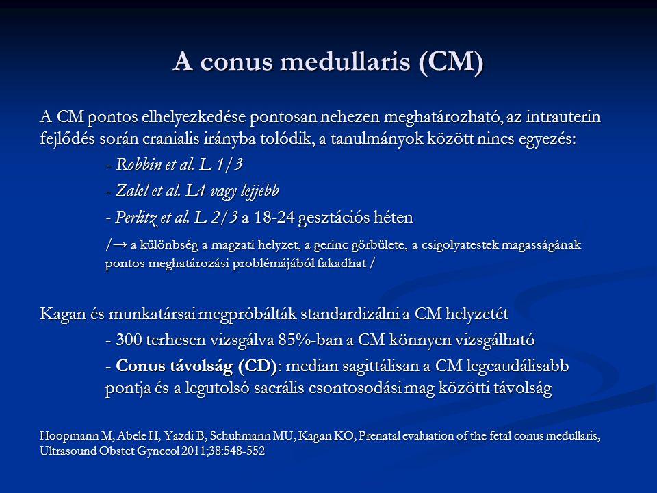 A conus medullaris (CM)