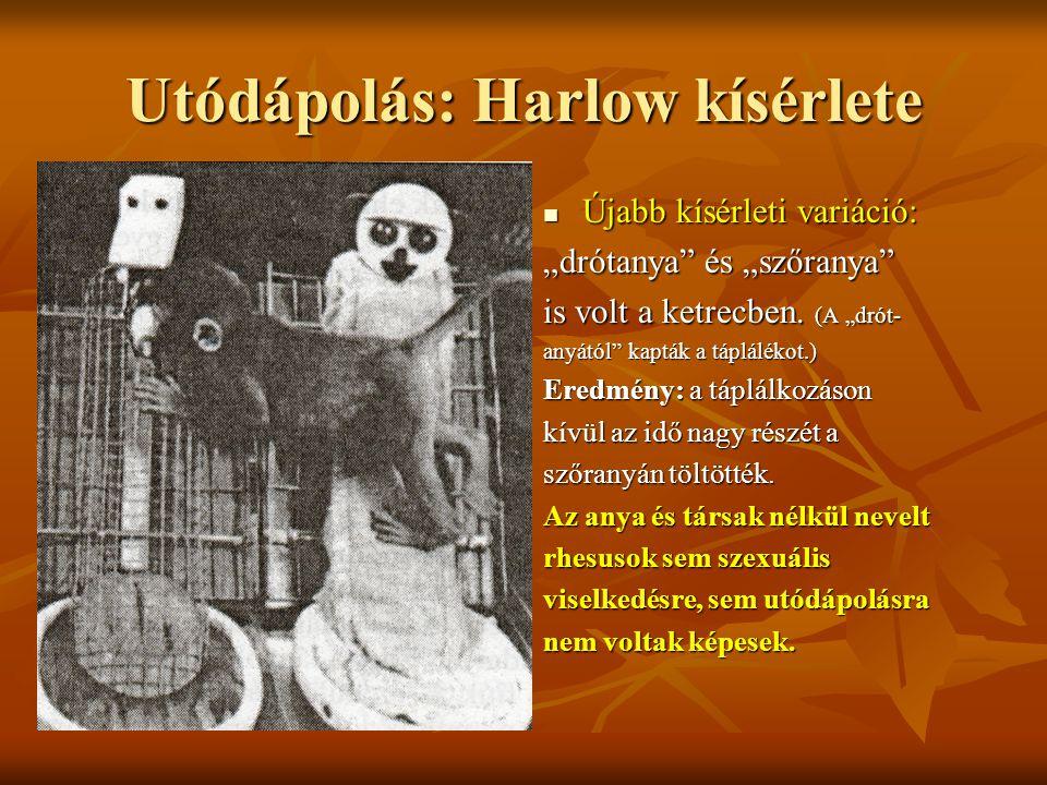 Utódápolás: Harlow kísérlete