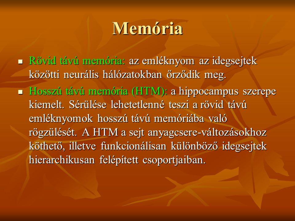 Memória Rövid távú memória: az emléknyom az idegsejtek közötti neurális hálózatokban őrződik meg.
