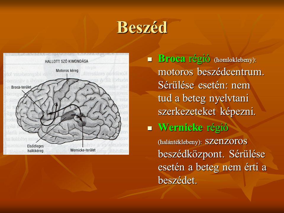 Beszéd Broca régió (homloklebeny): motoros beszédcentrum. Sérülése esetén: nem tud a beteg nyelvtani szerkezeteket képezni.