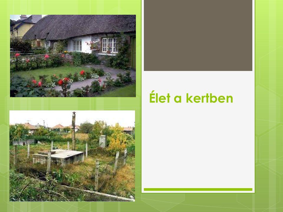 Élet a kertben
