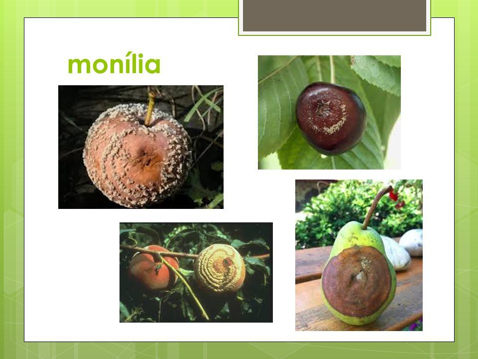monília