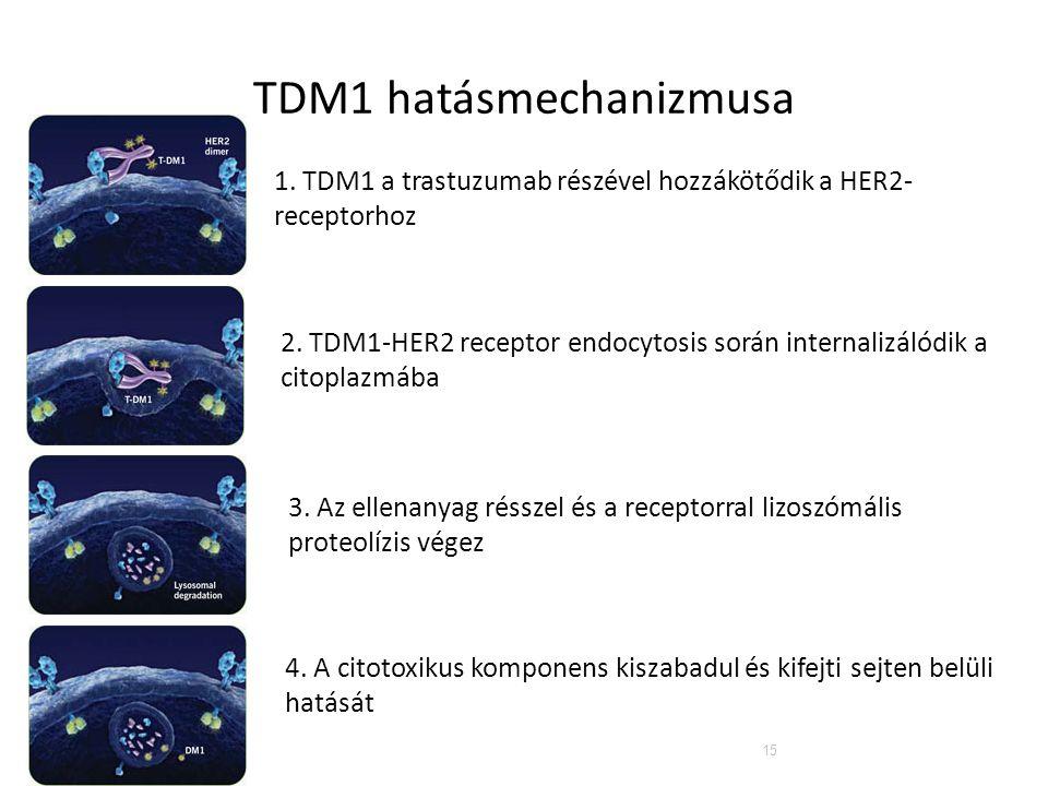 TDM1 hatásmechanizmusa