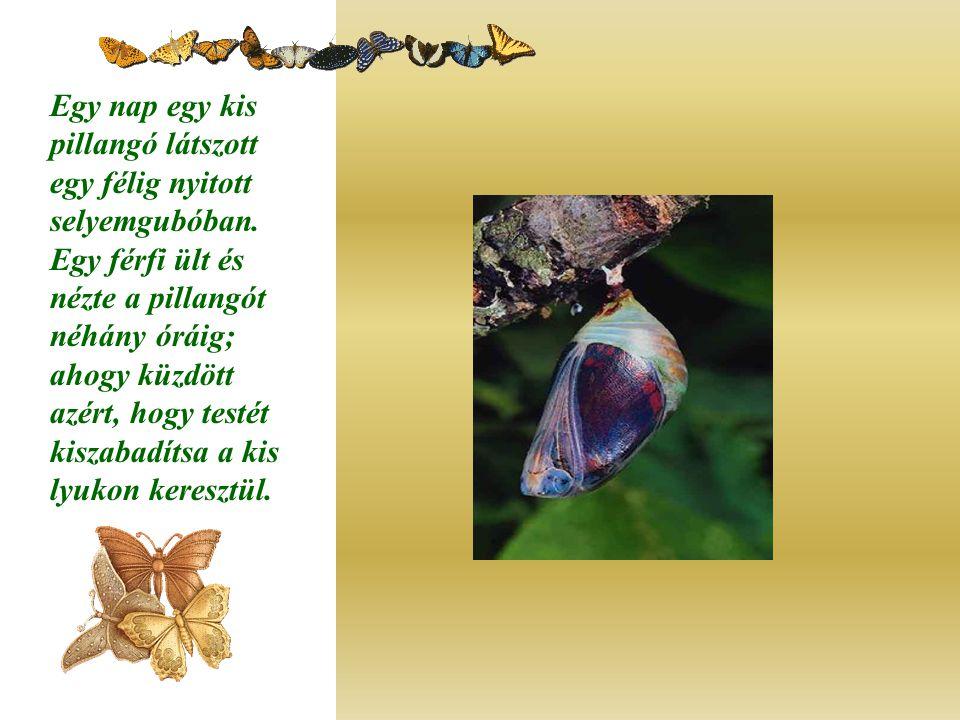 Egy nap egy kis pillangó látszott egy félig nyitott selyemgubóban.