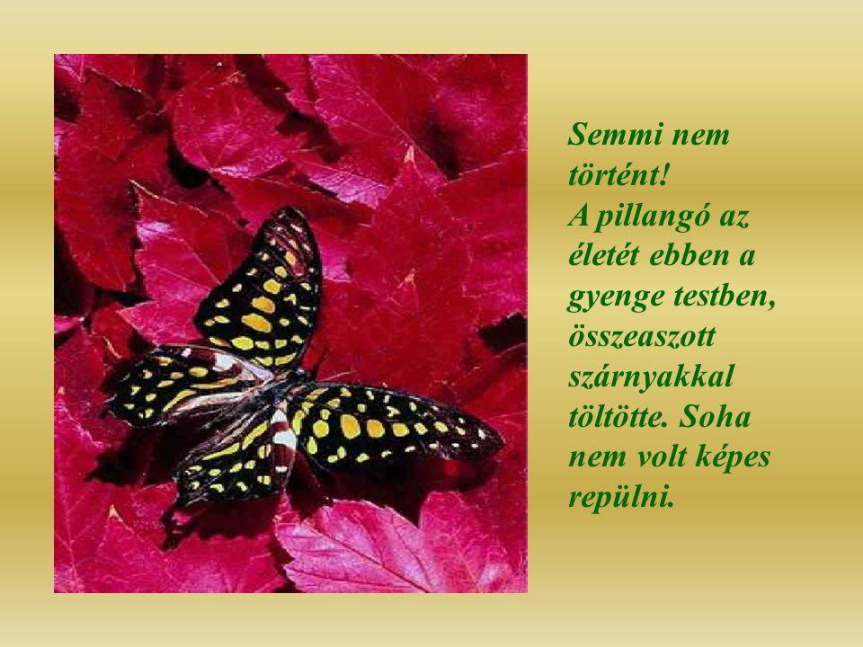 Semmi nem történt. A pillangó az életét ebben a gyenge testben, összeaszott szárnyakkal töltötte.
