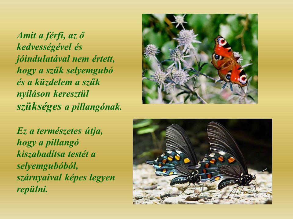 Amit a férfi, az ő kedvességével és jóindulatával nem értett, hogy a szűk selyemgubó és a küzdelem a szűk nyíláson keresztül szükséges a pillangónak.