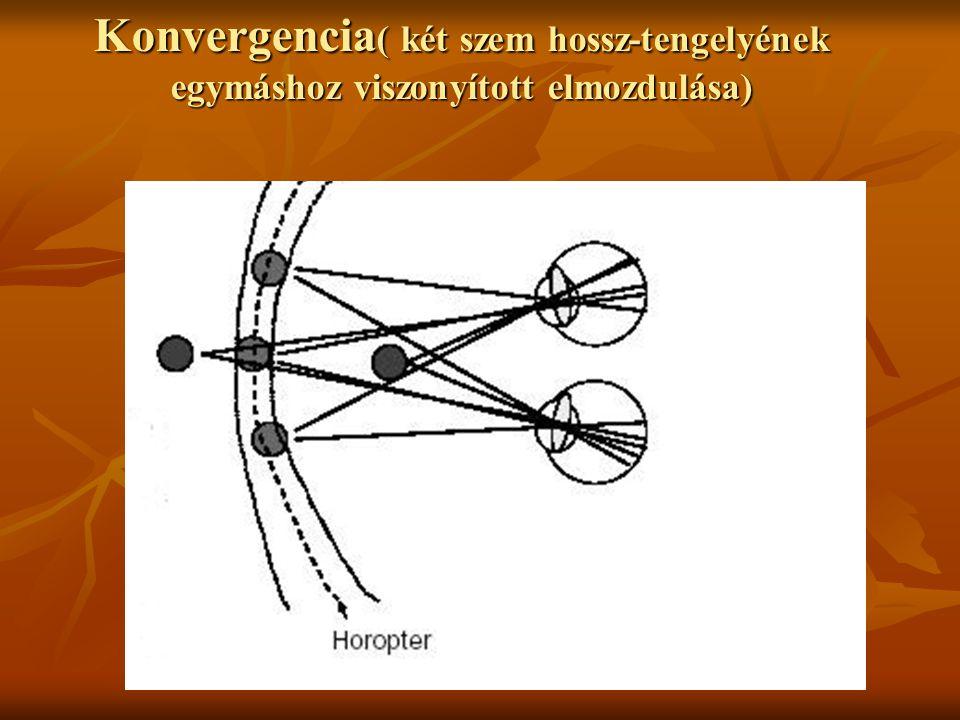 Konvergencia( két szem hossz-tengelyének egymáshoz viszonyított elmozdulása)