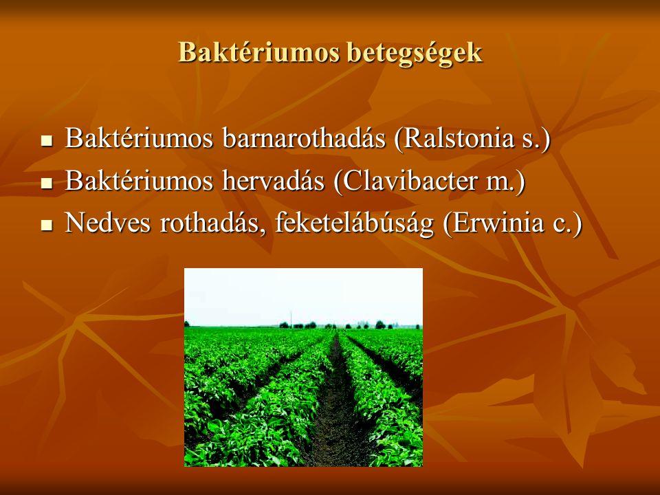 Baktériumos betegségek