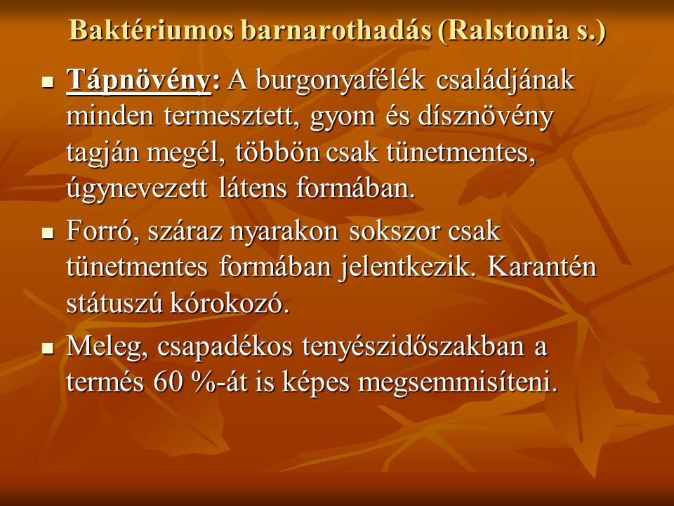 Baktériumos barnarothadás (Ralstonia s.)