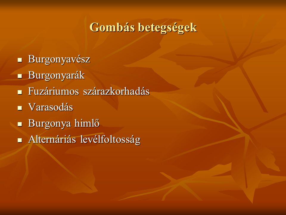 Gombás betegségek Burgonyavész Burgonyarák Fuzáriumos szárazkorhadás