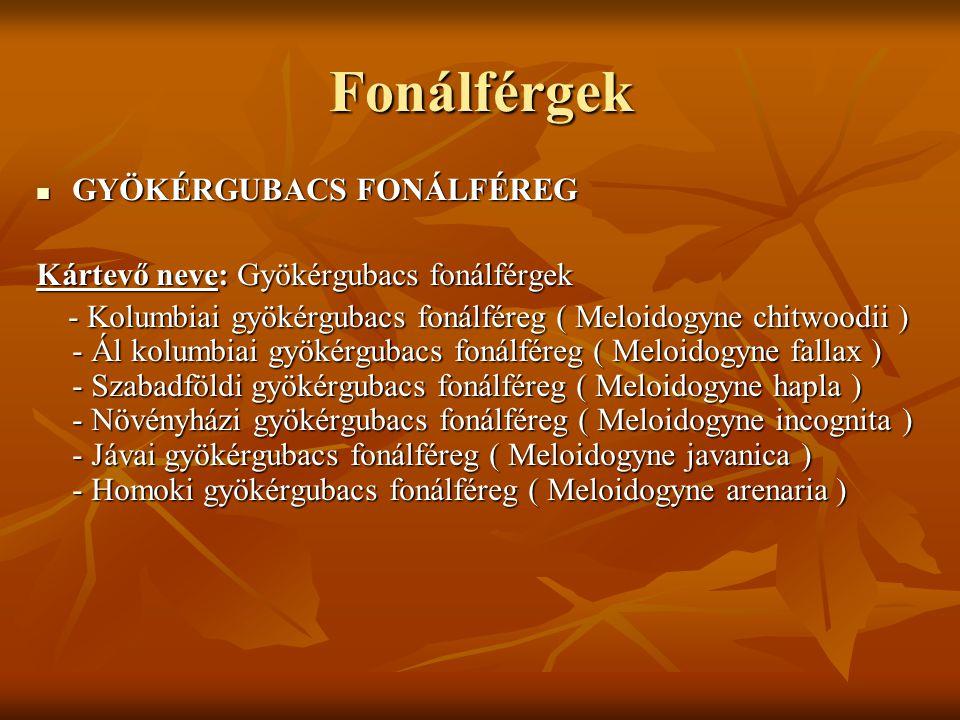 Fonálférgek GYÖKÉRGUBACS FONÁLFÉREG
