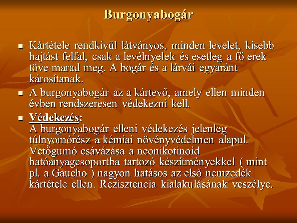 Burgonyabogár
