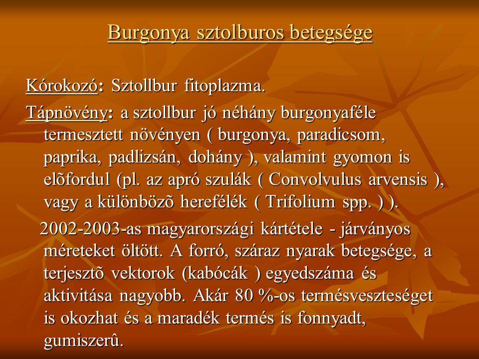 Burgonya sztolburos betegsége