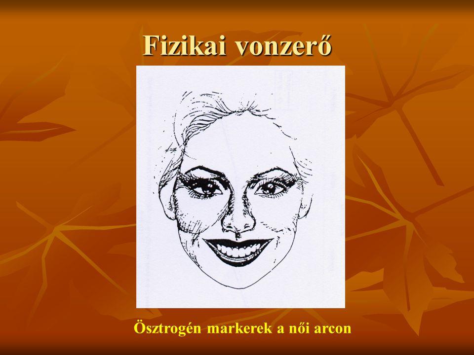 Fizikai vonzerő Ösztrogén markerek a női arcon