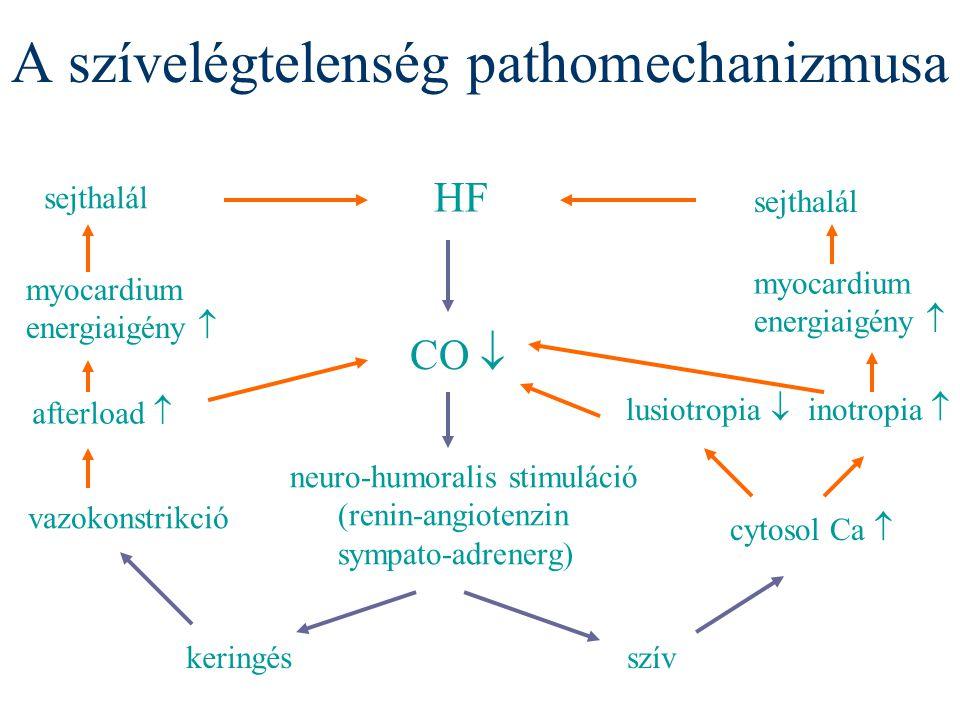 A szívelégtelenség pathomechanizmusa