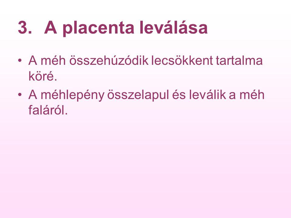 A placenta leválása A méh összehúzódik lecsökkent tartalma köré.