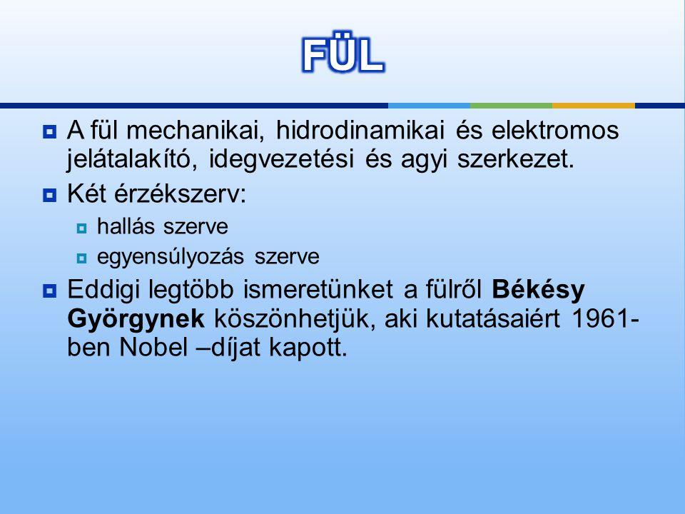 FÜL A fül mechanikai, hidrodinamikai és elektromos jelátalakító, idegvezetési és agyi szerkezet. Két érzékszerv: