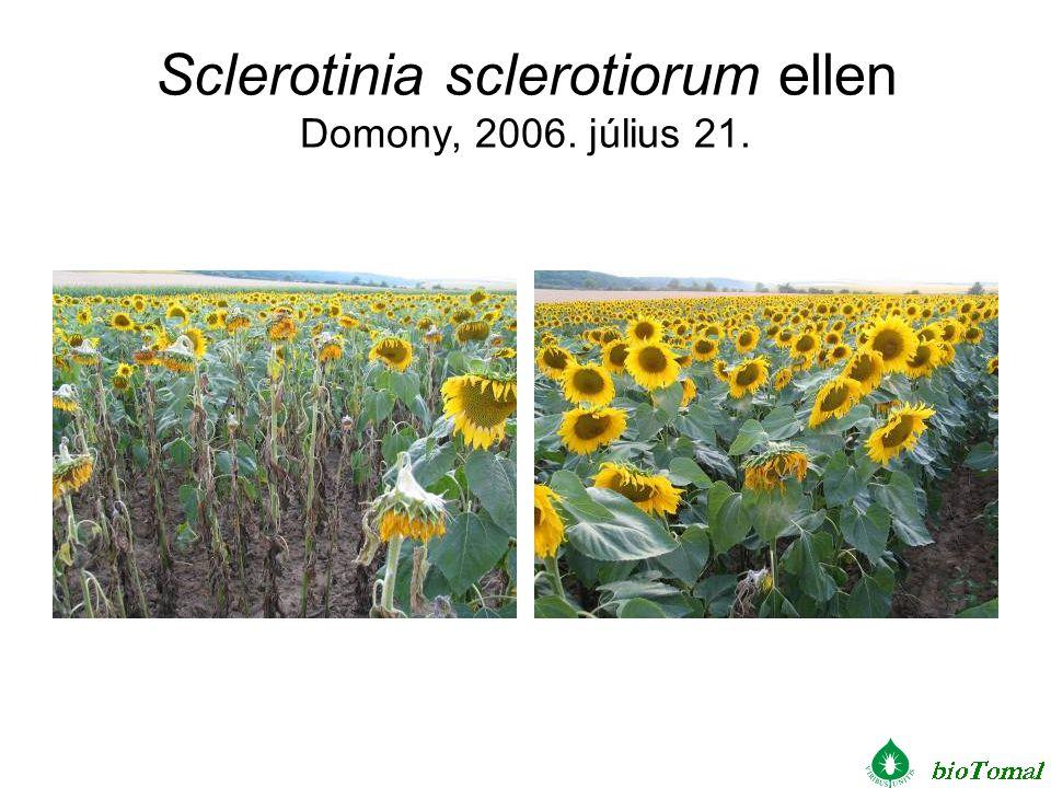 Sclerotinia sclerotiorum ellen Domony, 2006. július 21.