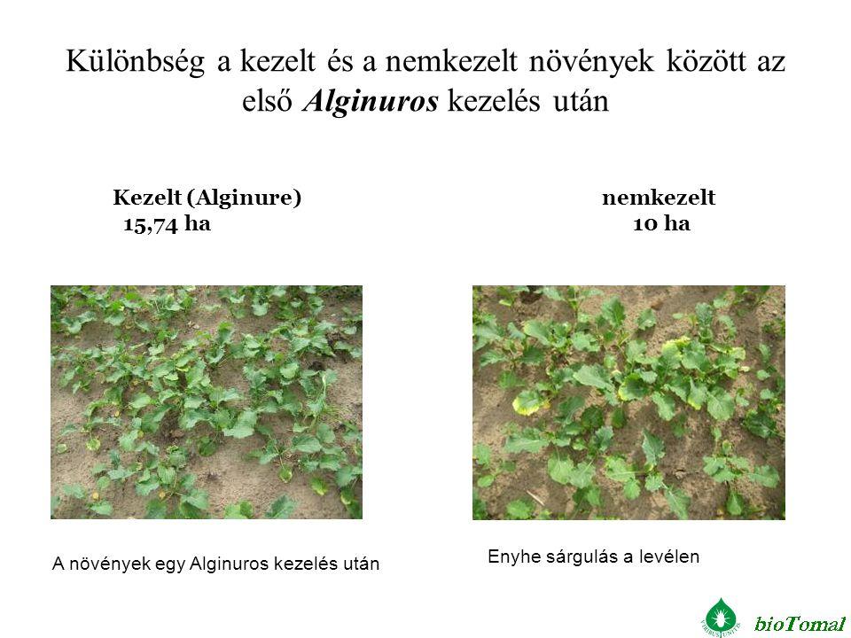 Különbség a kezelt és a nemkezelt növények között az első Alginuros kezelés után