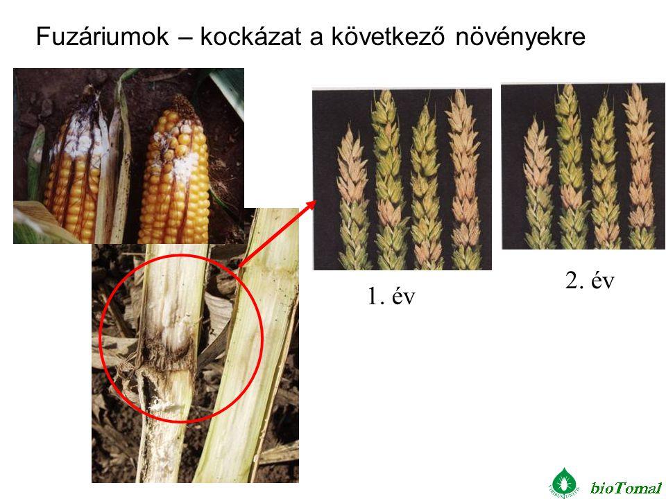 Fuzáriumok – kockázat a következő növényekre
