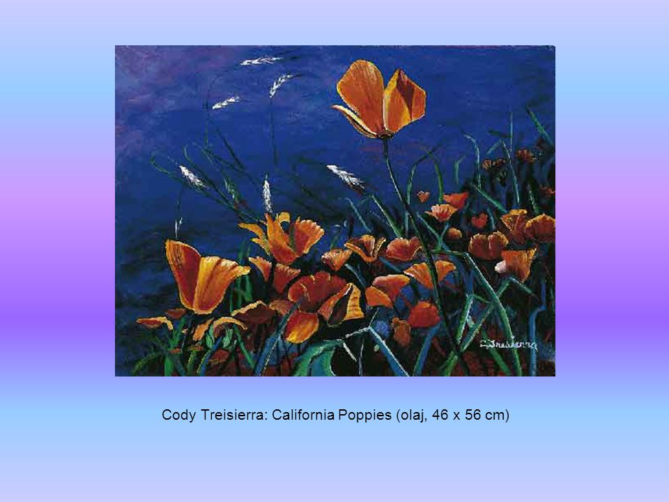 Cody Treisierra: California Poppies (olaj, 46 x 56 cm)