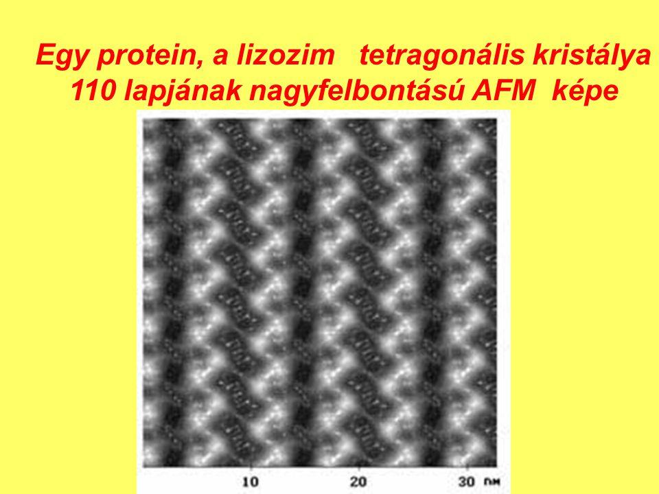 Egy protein, a lizozim tetragonális kristálya 110 lapjának nagyfelbontású AFM képe