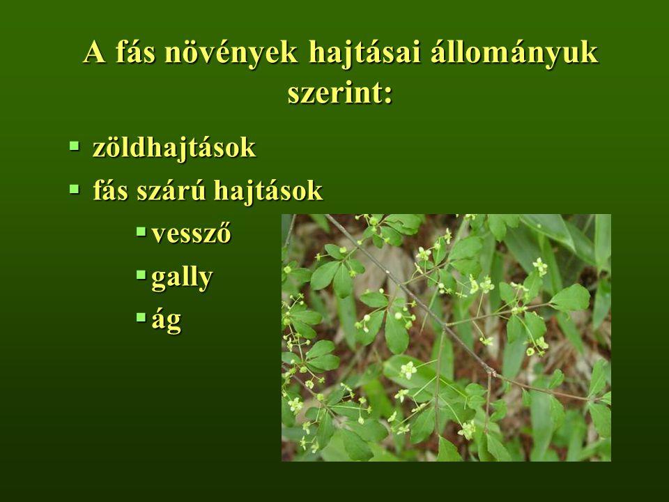 A fás növények hajtásai állományuk szerint: