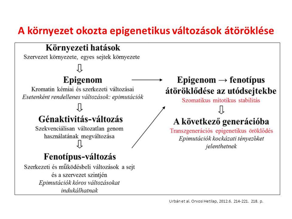 A környezet okozta epigenetikus változások átöröklése
