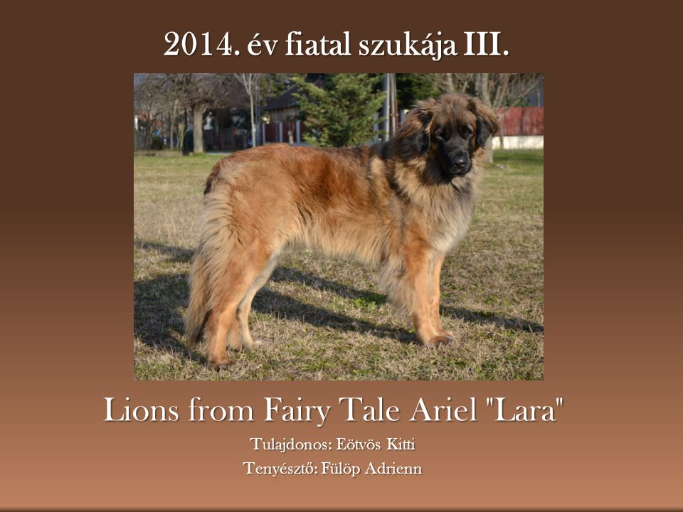 Lions from Fairy Tale Ariel Lara