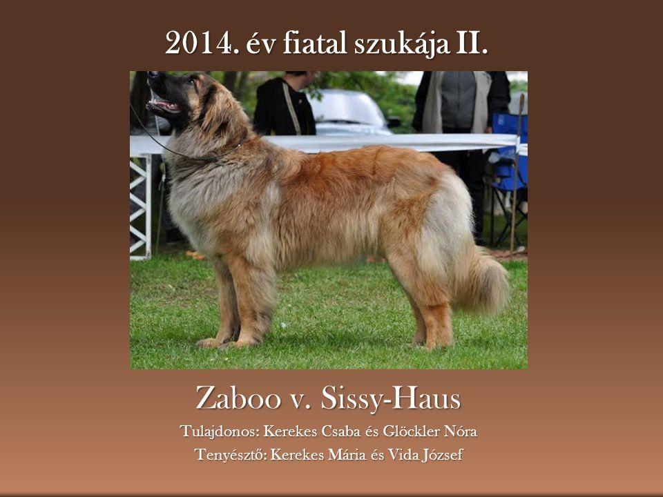2014. év fiatal szukája II. Zaboo v. Sissy-Haus
