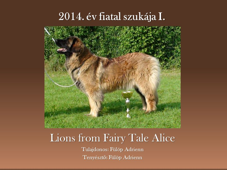 Lions from Fairy Tale Alice