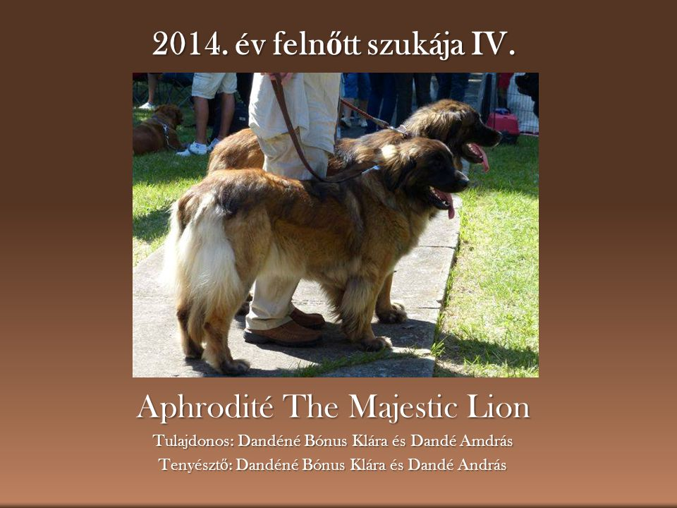 Aphrodité The Majestic Lion