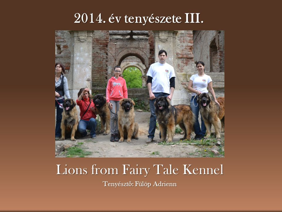 Lions from Fairy Tale Kennel