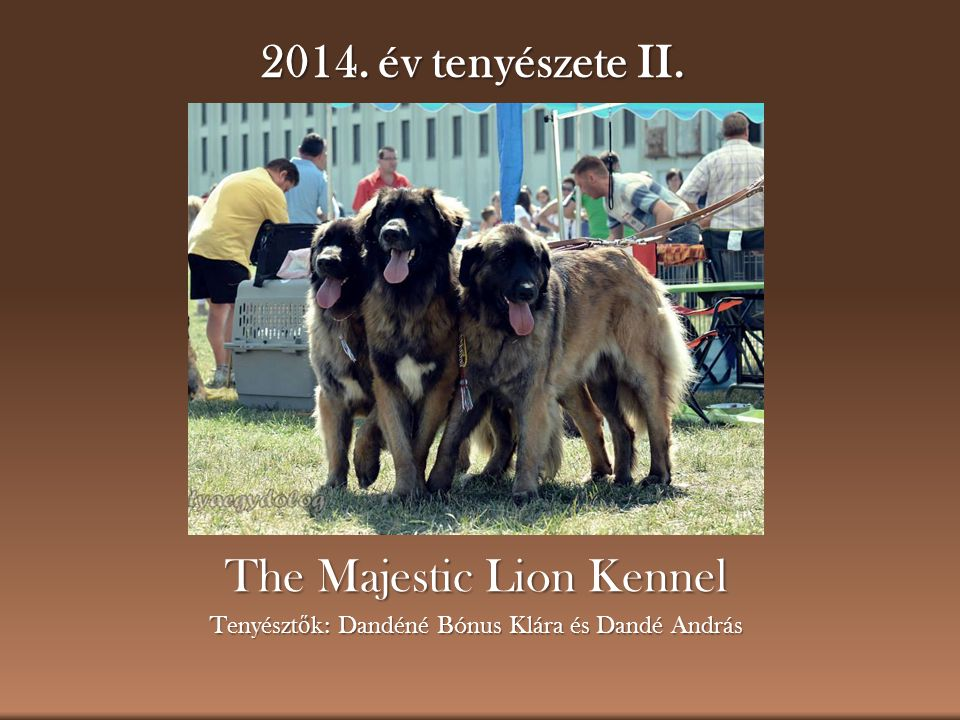 The Majestic Lion Kennel