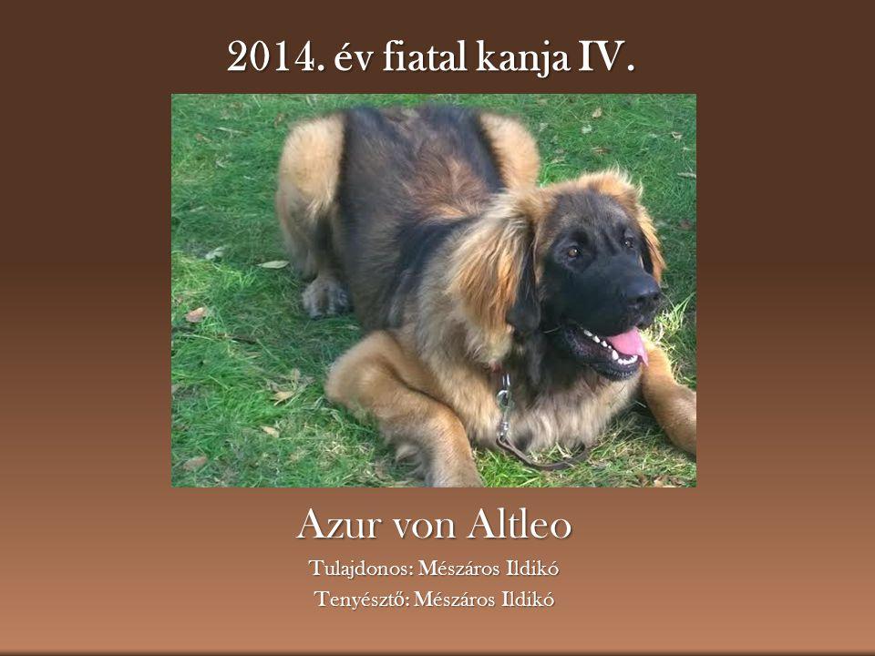 2014. év fiatal kanja IV. Azur von Altleo Tulajdonos: Mészáros Ildikó