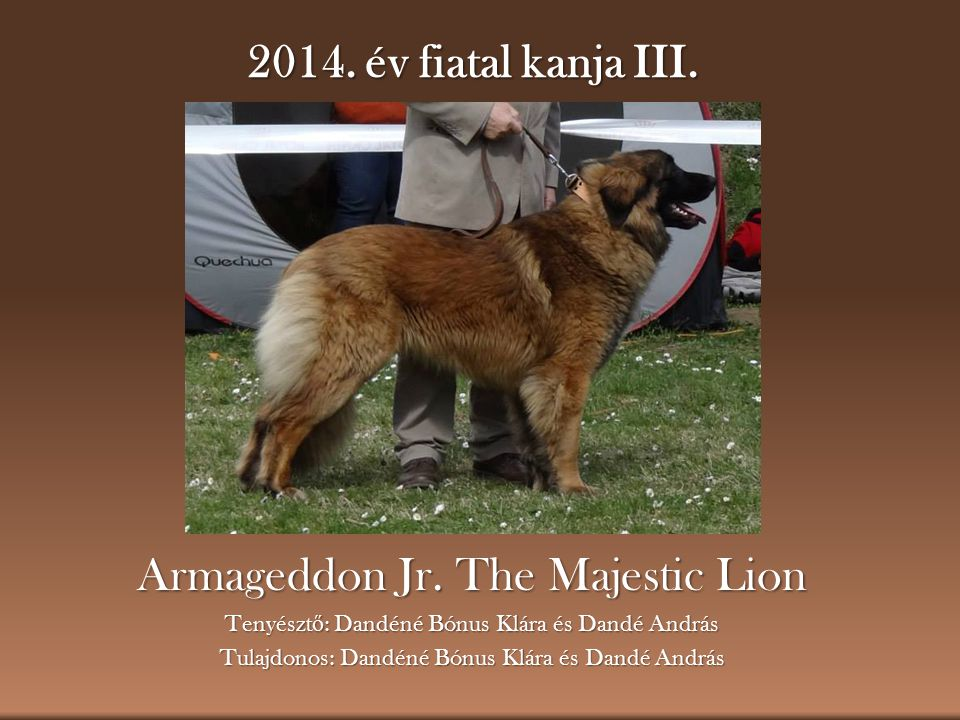 Armageddon Jr. The Majestic Lion