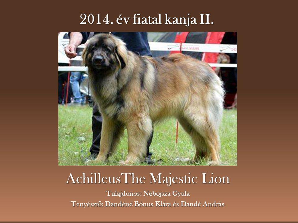 AchilleusThe Majestic Lion