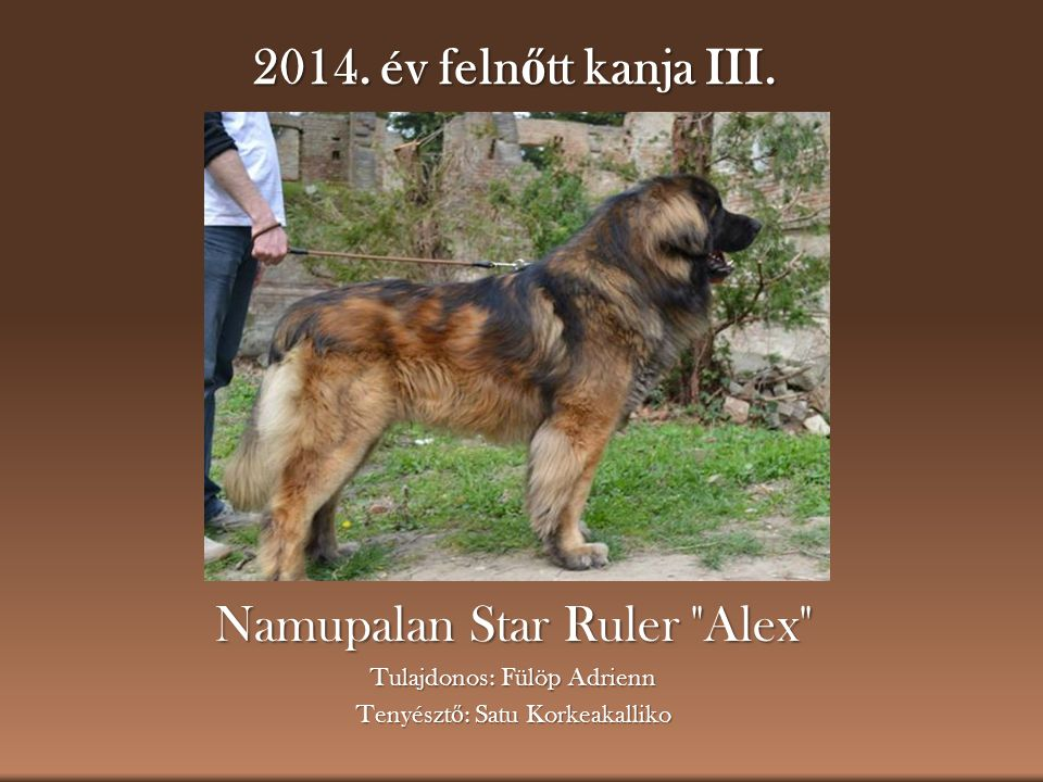 Namupalan Star Ruler Alex