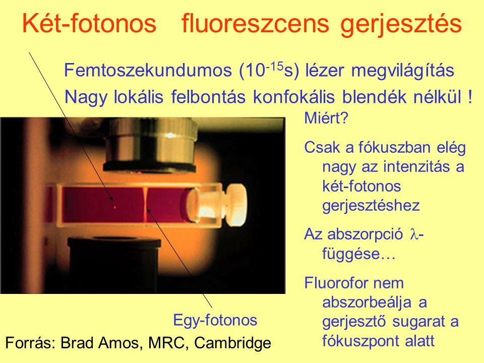 Két-fotonos fluoreszcens gerjesztés