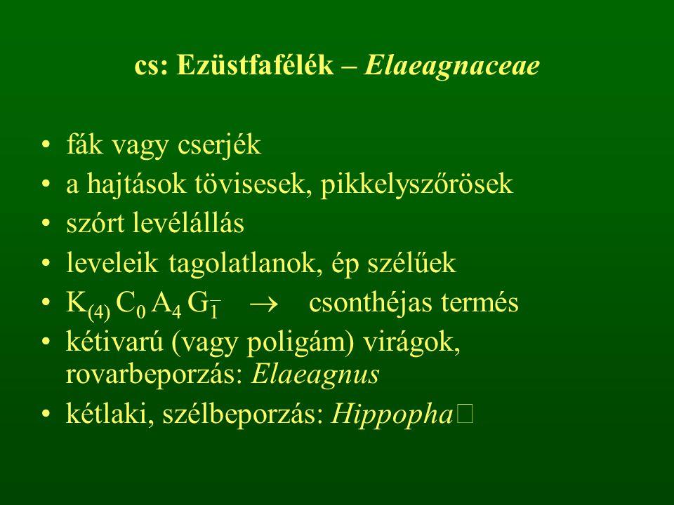 cs: Ezüstfafélék – Elaeagnaceae