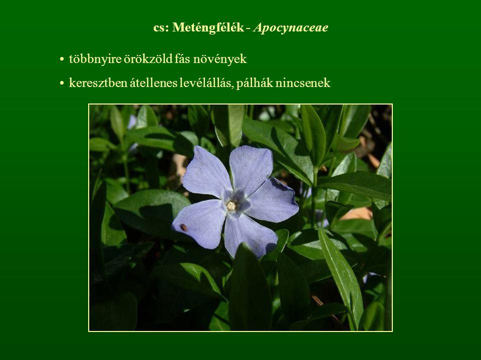 cs: Meténgfélék - Apocynaceae