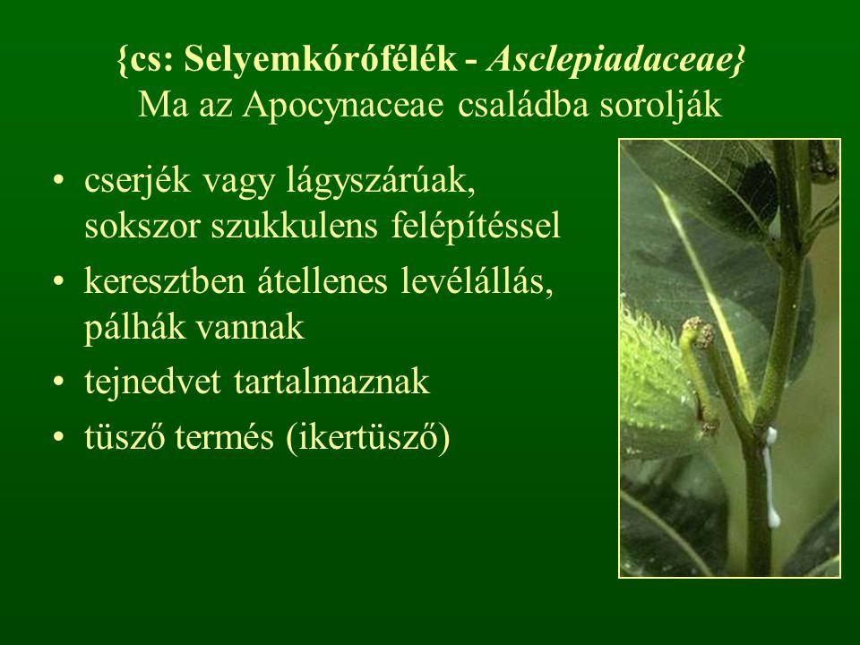 {cs: Selyemkórófélék - Asclepiadaceae} Ma az Apocynaceae családba sorolják