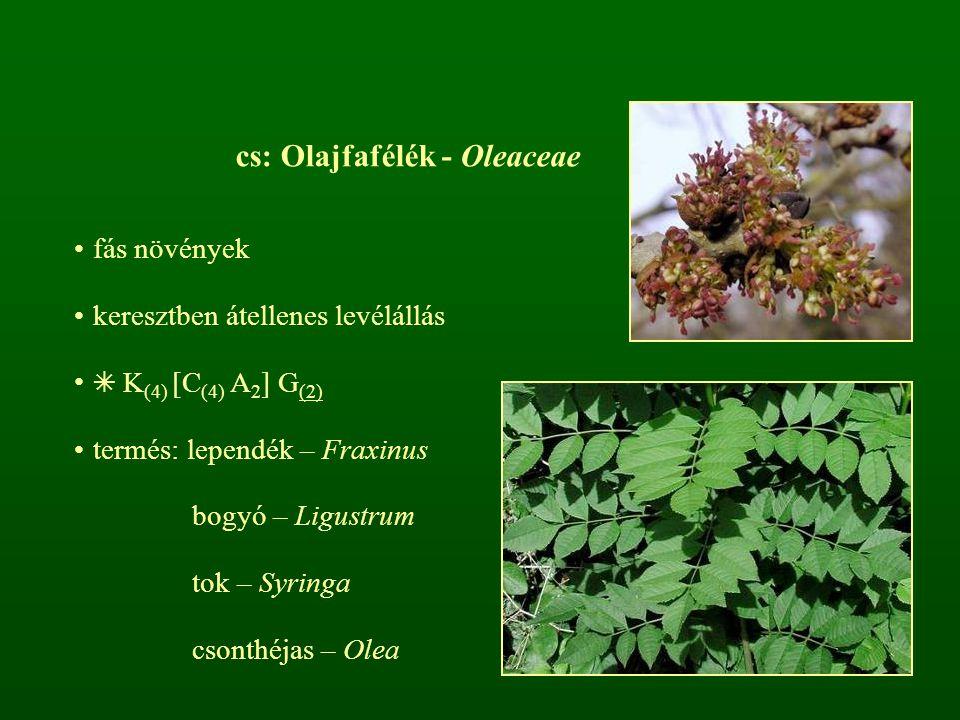 cs: Olajfafélék - Oleaceae