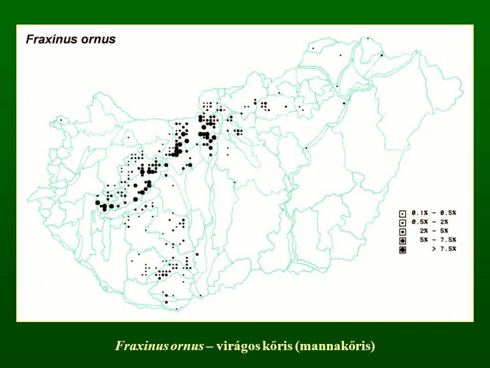 Fraxinus ornus – virágos kőris (mannakőris)