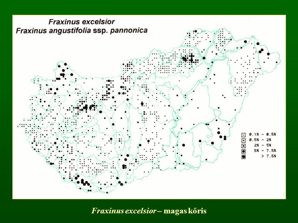 Fraxinus excelsior – magas kőris