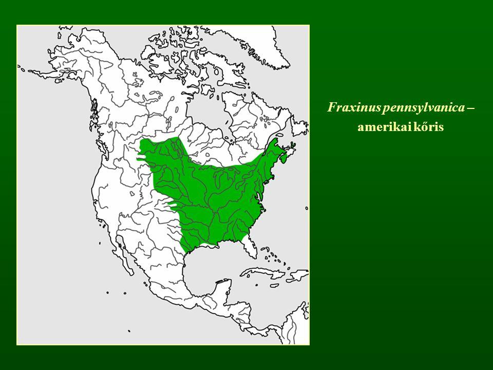 Fraxinus pennsylvanica –